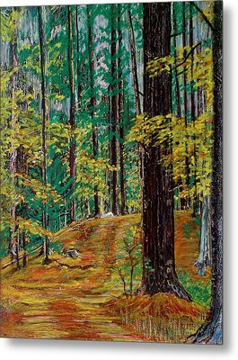 Trail At Wason Pond Metal Print by Sean Connolly