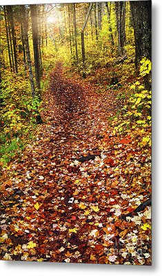 Trail In Fall Forest Metal Print by Elena Elisseeva