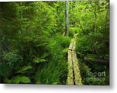 Trail Through The Woods Metal Print by Diane Diederich