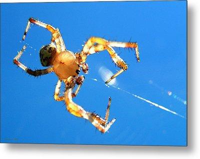 Trapeze Spider Metal Print by Christina Rollo