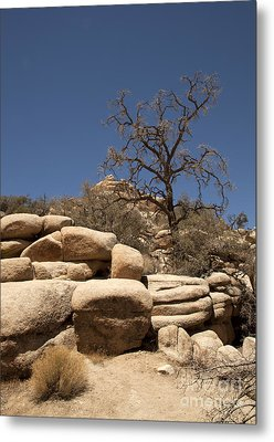 Tree At Joshua Tree Metal Print by Amanda Barcon