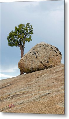 Tree At Olmsted Point Yosemite National Park California Metal Print by Christine Till