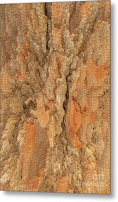Tree Bark Abstract Metal Print by Cindy Lee Longhini