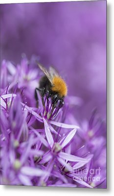 The Tree Bumblebee Metal Print by Tim Gainey