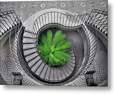Tree Fern In The Stairs Metal Print by Daniel Furon