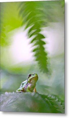 tree frog Hyla arborea Metal Print by Dirk Ercken