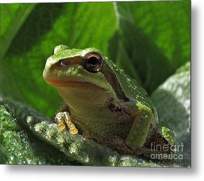 Tree Frog Metal Print by Inge Riis McDonald