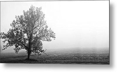Tree In The Fog Metal Print by Andrew Soundarajan