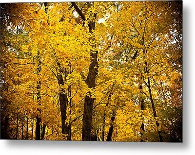 Tree Of Gold Metal Print by Kamil Swiatek