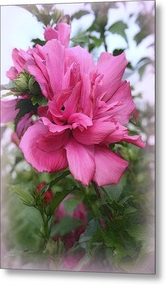 Tree Rose Of Sharon Metal Print by Kay Novy