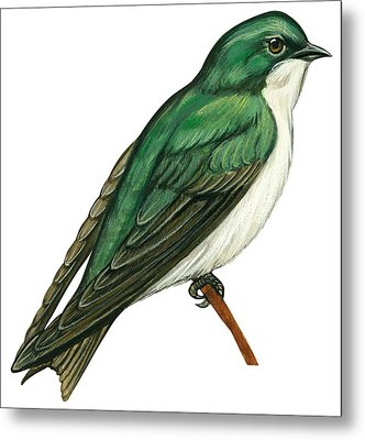 Tree Swallow  Metal Print by Anonymous