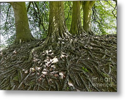 Trees And Roots Wiltshire England Metal Print by Robert Preston