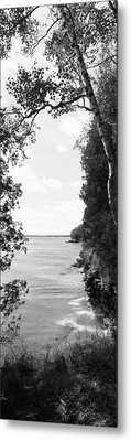 Trees At The Lakeside, Cave Point Metal Print by Panoramic Images