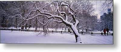 Trees Covered With Snow In A Park Metal Print by Panoramic Images