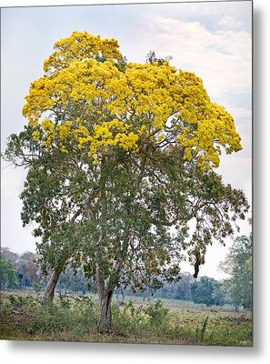 Trees In A Field, Three Brothers River Metal Print by Panoramic Images