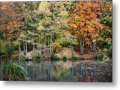 Trees In Autumn Metal Print by Natalie Kinnear