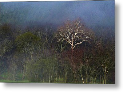 Trees In Fog 4 Metal Print by Dena Kidd