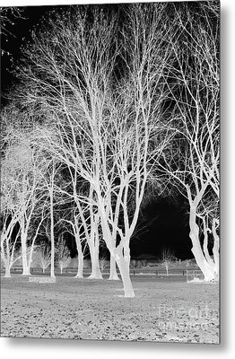 Trees In Park 2 Metal Print by Chalet Roome-Rigdon