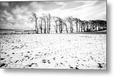 Trees In Snow Scotland Iv Metal Print by John Farnan