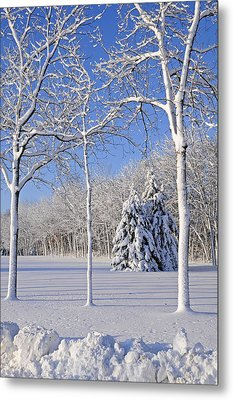 Trees In Snow  Wisconsin Metal Print by Anonymous
