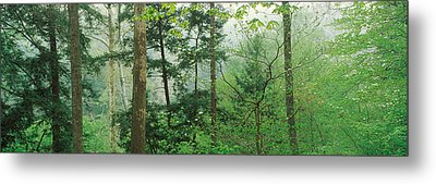 Trees In Spring Forest, Turkey Run Metal Print by Panoramic Images