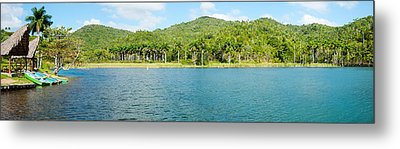 Trees On A Hill, Las Terrazas, Pinar Metal Print by Panoramic Images