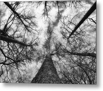 Treetops Metal Print by Tom Druin