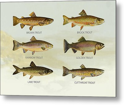 Trout Species Metal Print by Aged Pixel