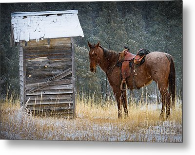 Trusty Horse  Metal Print by Inge Johnsson