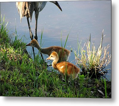 Trying To Catch... Metal Print by Zina Stromberg
