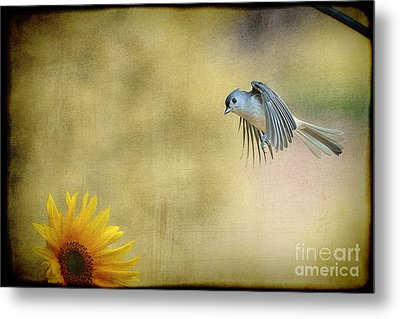 Tufted Titmouse Flying Over Flower Metal Print by Dan Friend