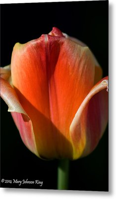 Tulip 4 Metal Print by Mary  King