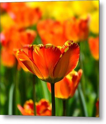 Tulip Metal Print by Gynt