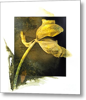 Tulip On A Textured Brown Background. Metal Print by Bernard Jaubert