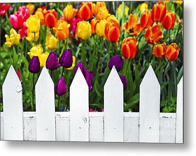 Tulips Behind White Fence Metal Print by Elena Elisseeva