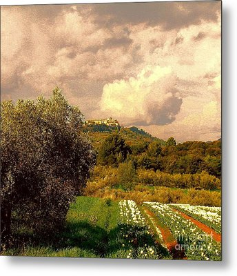 Tulips Field And Lurs Village In Provence France Metal Print by Flow Fitzgerald