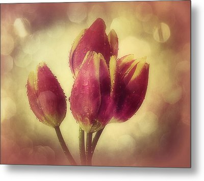 Tulips In The Rain Metal Print by Anne Macdonald
