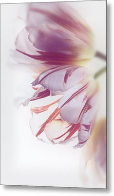 Tulips Metal Print by Kim Aston