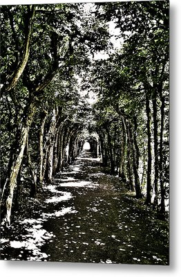 Tunnel Of Trees ... Metal Print by Juergen Weiss