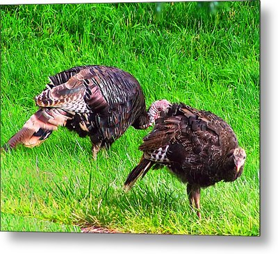 Turkeys In A Field Metal Print by Chris Flees