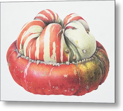 Turks Turban Squash Metal Print by Margaret Ann Eden