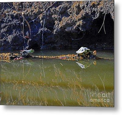 Turtle And Frog On A Log Metal Print by Al Powell Photography USA