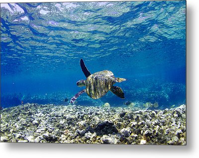 Turtle Cruise Metal Print by Sean Davey