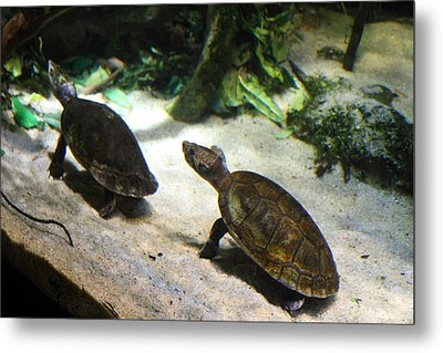 Turtle - National Aquarium In Baltimore Md - 121219 Metal Print by DC Photographer