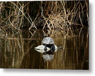 Turtle On Turtle Metal Print by Ernie Echols