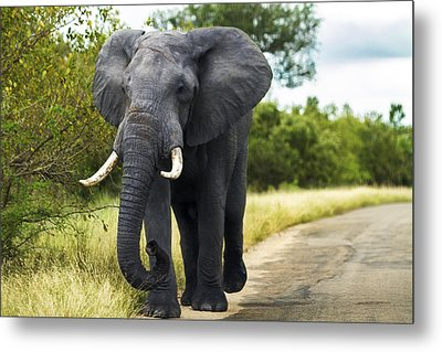 Tusker With Attitude Metal Print by Peter Turner