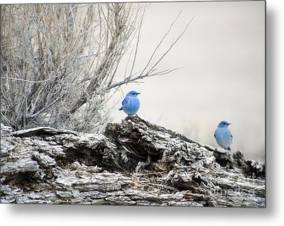 Twice As Happy Metal Print by Deby Dixon