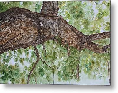 Twisted Maple Metal Print by Patsy Sharpe