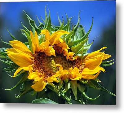 Twisted Sunflower Metal Print by Gail Butler