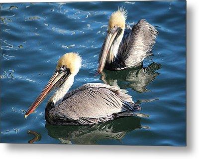 Two Beautiful Pelicans Metal Print by Cynthia Guinn